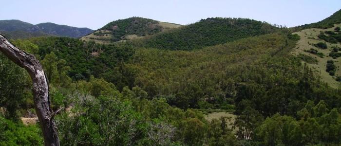 Anno 2008, progetto di utilizzazione boschiva e stima